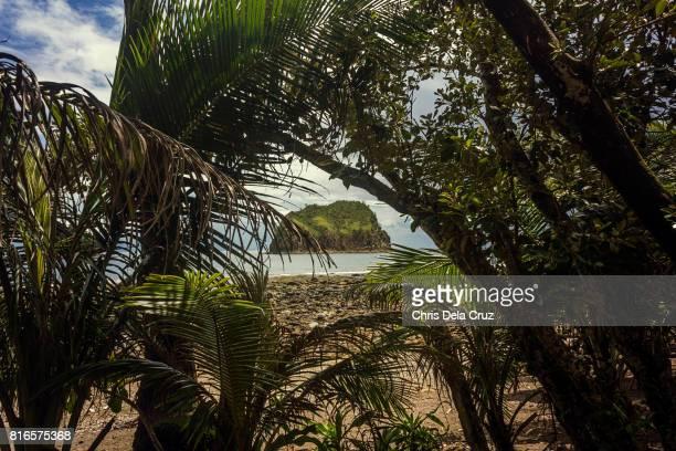 Islet framed among trees