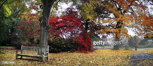 Isleworth, UNITED KINGDOM: A gardener uses a blower to clear a path of leaves in the gardens of Syon Park, home of The Duke of Northumberland, in...
