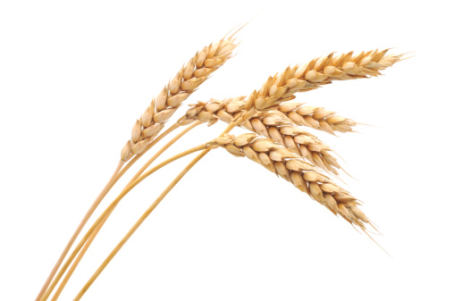 Isolated bunch of wheat 110876251