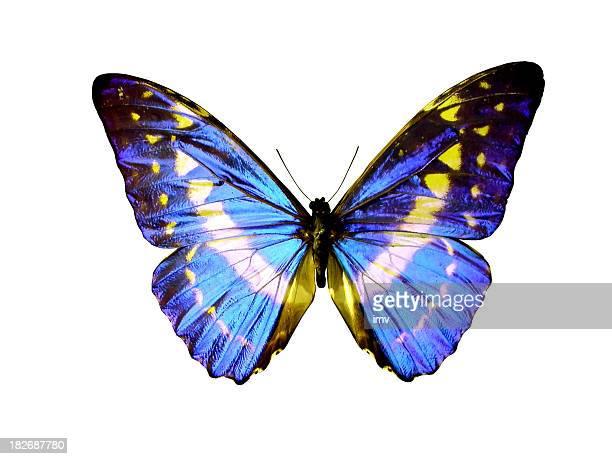 Isolierte butterfly