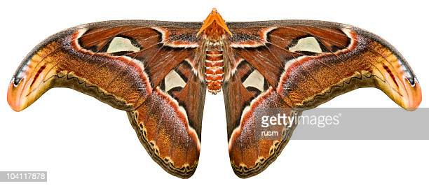 isolated butterfly with clipping path on white background - moth stock pictures, royalty-free photos & images