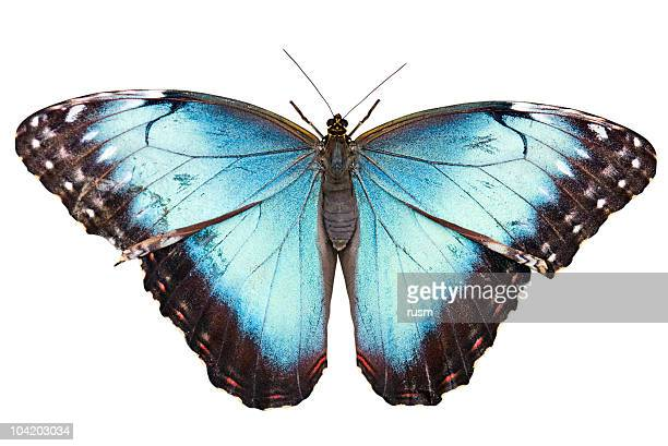 Isolated butterfly with clipping path on white background