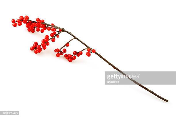 isolated christmas holly twig - twijg stockfoto's en -beelden