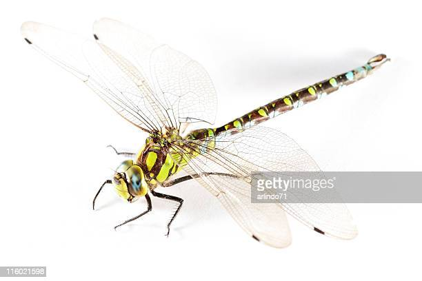 Isolated dragonfly 01