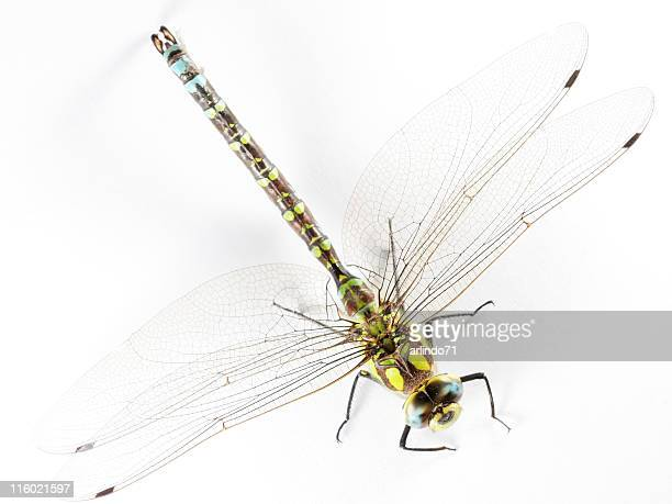 Isolated dragonfly 02