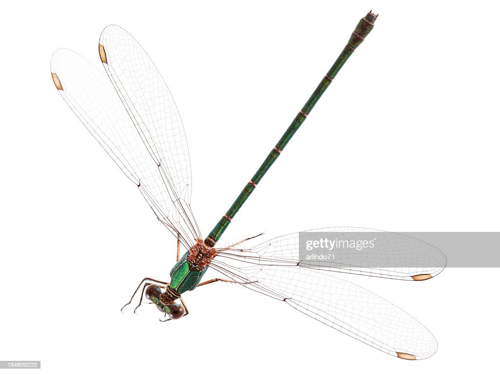 Isolated Dragonfly : Stock Photo