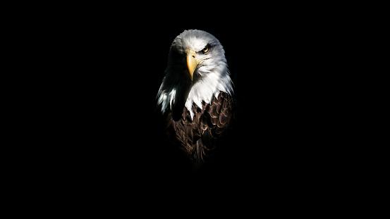 Isolated Eagle Stare 601944104