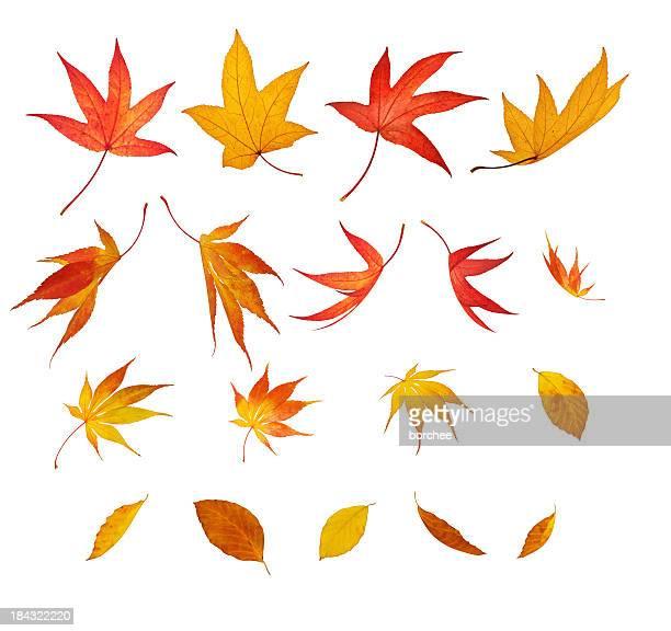 Fallen Herbst Blätter Isoliert