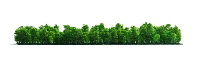 Isolated Forest Stripe 183579408