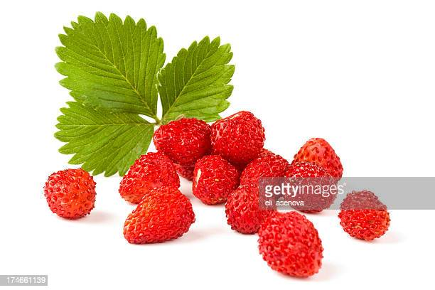 Isolated fruits - Wild Strawberries