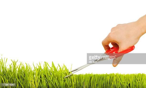 Isolierte Gras und Hände mit Papier