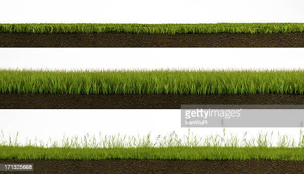 isolated grass - cross section stock pictures, royalty-free photos & images