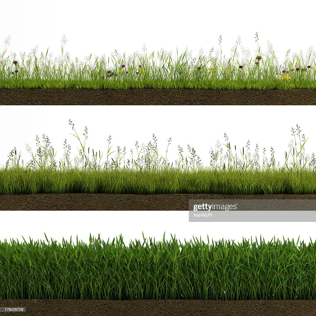 Isolated grass : Stock Photo