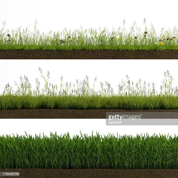 isolated grass - meadow stock photos and pictures