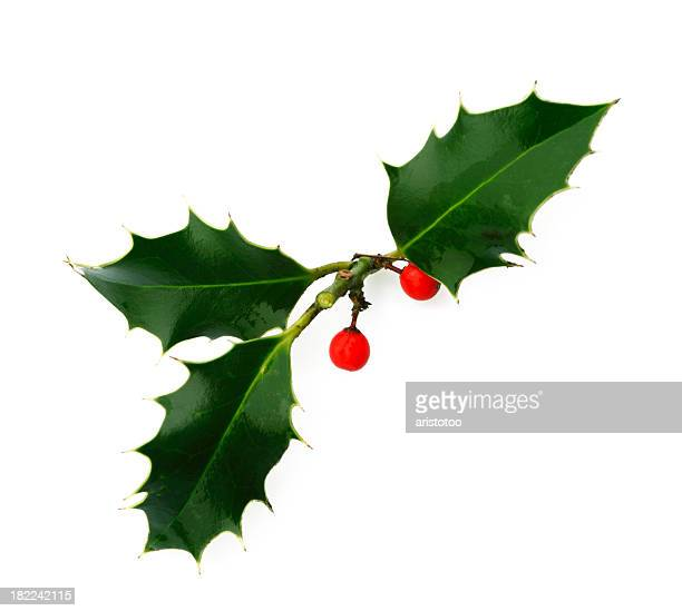 Isolated Holly