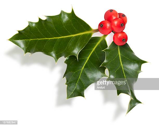 isolated holly twig - holly stock pictures, royalty-free photos & images
