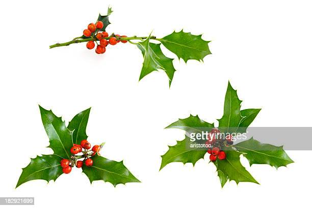 isolated holly twig selection - twijg stockfoto's en -beelden