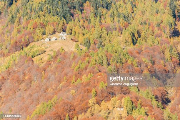 Isolated house hidden among colorful trees in autumn,  Val Vigezzo, Verbano Cusio Ossola province, Piedmont, North italy, Italy