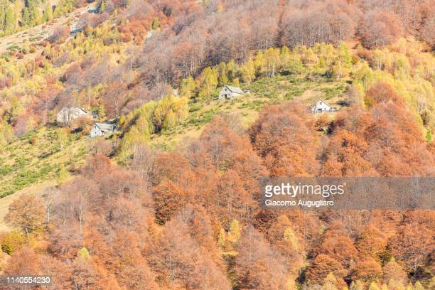 Isolated houses hidden among colorful trees in autumn,  Val Vigezzo, Verbano Cusio Ossola province, Piedmont, North italy, Italy