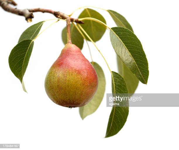 Isolated Pear