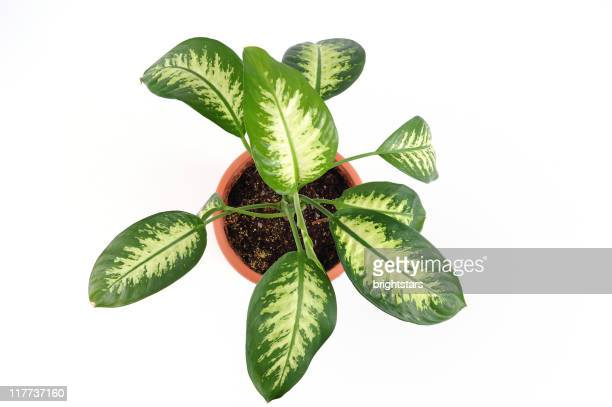 isolated potted plant - pot plant stock pictures, royalty-free photos & images