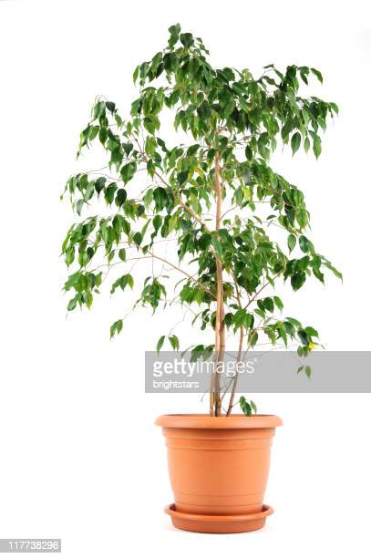 isolated potted plant - houseplant stock pictures, royalty-free photos & images