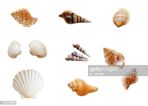 Isolated shells