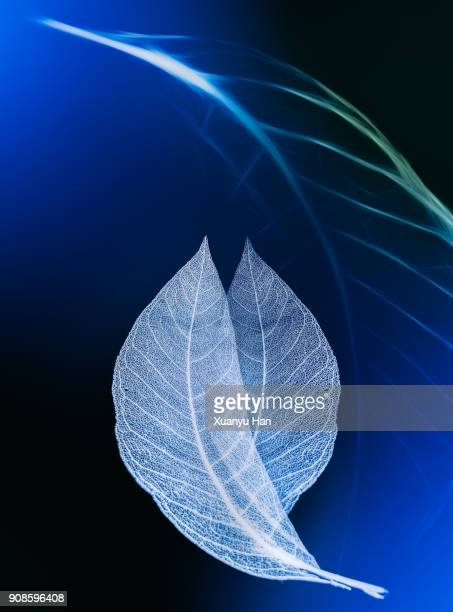Isolated shot of perfect leaf veins on abstract background