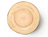 Isolated shot of tree cross section on white background