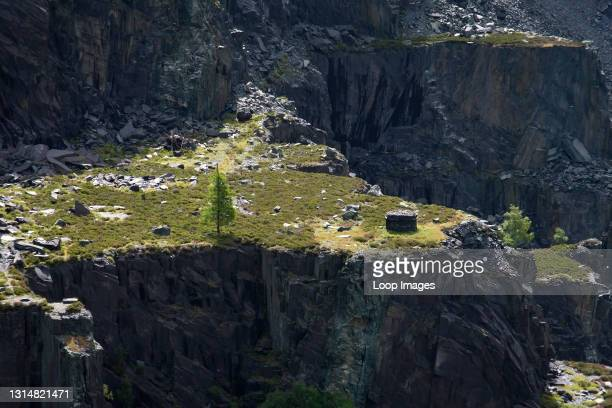 Isolated tree at Dinorwic Slate Quarry in Snowdonia.