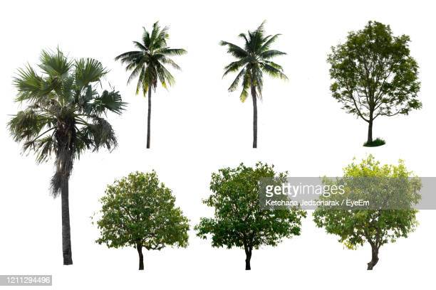 isolated tree set a white background. - tropical tree stock pictures, royalty-free photos & images