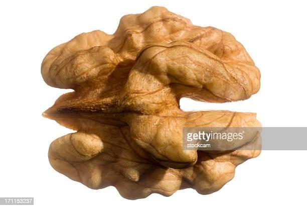 Isolated Walnut fruit nut
