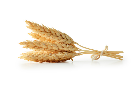 Isolated wheat 938604396