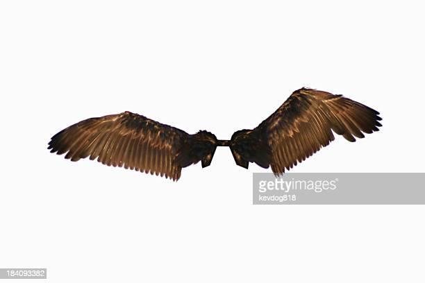 Isolé des ailes