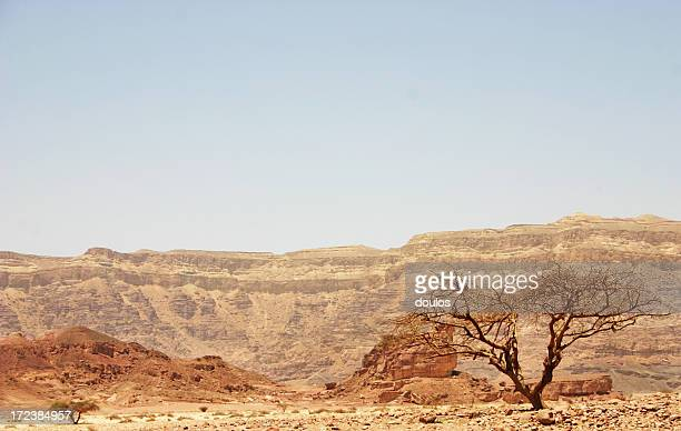israel wilderness - historical palestine stock pictures, royalty-free photos & images