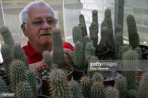 52 Hoodia Photos And Premium High Res Pictures Getty Images