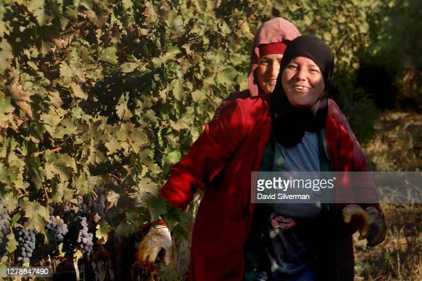 Israeli Arab workers take a moments break from picking Cabernet Sauvignon grapes for Bazelet Hagolan winery on its last day of the 2020 harvest on...