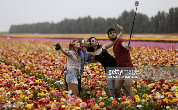 Israelis take a group 'selfie' picture with a cell phone and a rugged camera in a field of Ranunculus flowers in the southern Israeli Kibbutz of Nir...