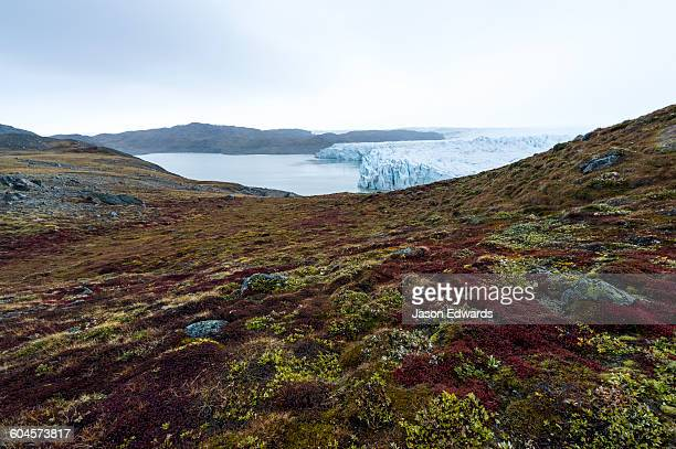 Autumn colours dapple the tundra near a glacier at the end of the brief summer.