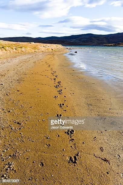 Caribou footprints in the sand on the shoreline of an alpine lake.