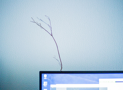 It grows branch from those inthe room - gettyimageskorea