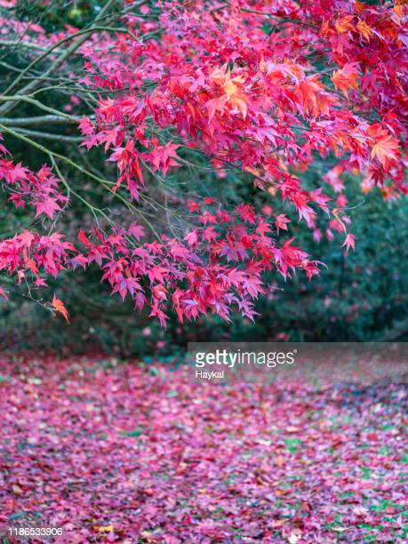 it is autumn! - tetbury stock pictures, royalty-free photos & images
