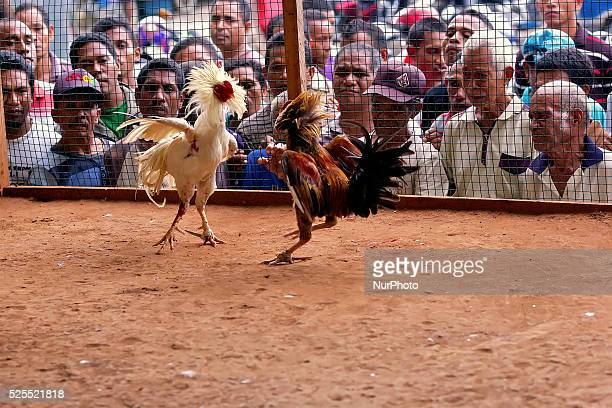 Small Cock Stock Photos And Pictures  Getty Images-9566
