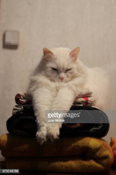 it is good to be a cat - nikitina stock pictures, royalty-free photos & images