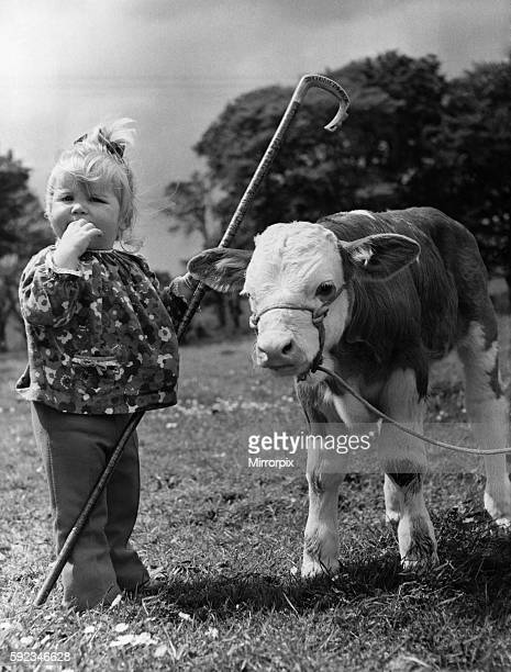It may look as if Little Bo Peep has come unstuck again and found herself a bull But it's actually little Anne Young 18 months old making friends...