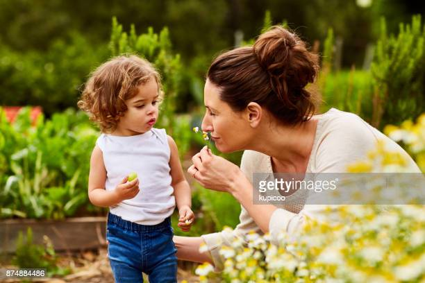 it smells as fresh as a daisy - agricultural activity stock pictures, royalty-free photos & images