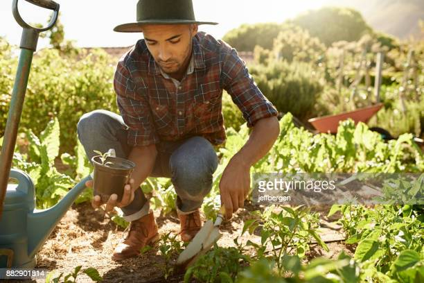 it takes hard work to maintain a farm - organic farm stock pictures, royalty-free photos & images