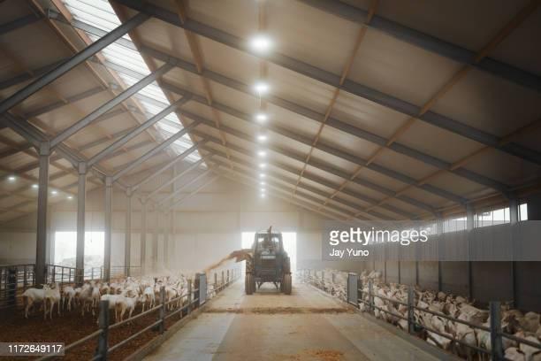 het neemt de beste - farm stockfoto's en -beelden