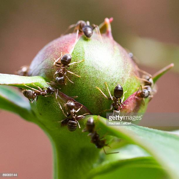 it was all you can eat at the ant buffet - weybridge stock photos and pictures