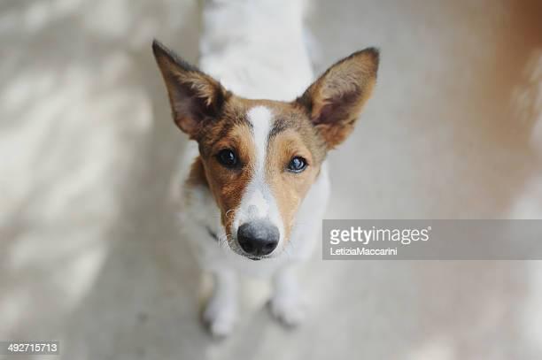 イタリア、ピドモント、tortona の子犬、ポートレートカメラ目線 - italia ストックフォトと画像